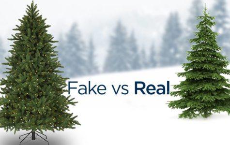 Fake or Real Christmas Tree?