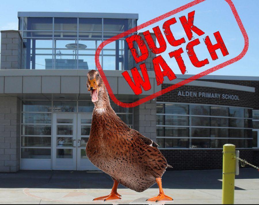 LIVE+STREAM%3A+Alden+Primary+School+Ducks